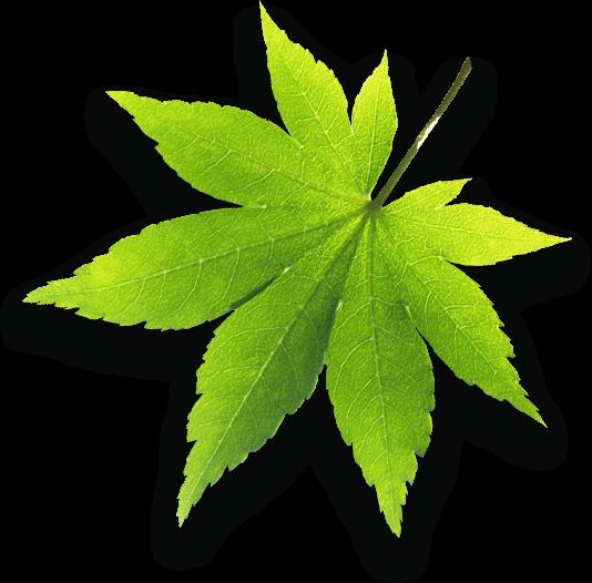 Bladet symboliserar att KO Mätteknik värnar om miljön